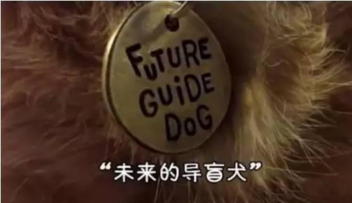金毛入选导盲犬后抑郁了,被开除后当起了旅游博主