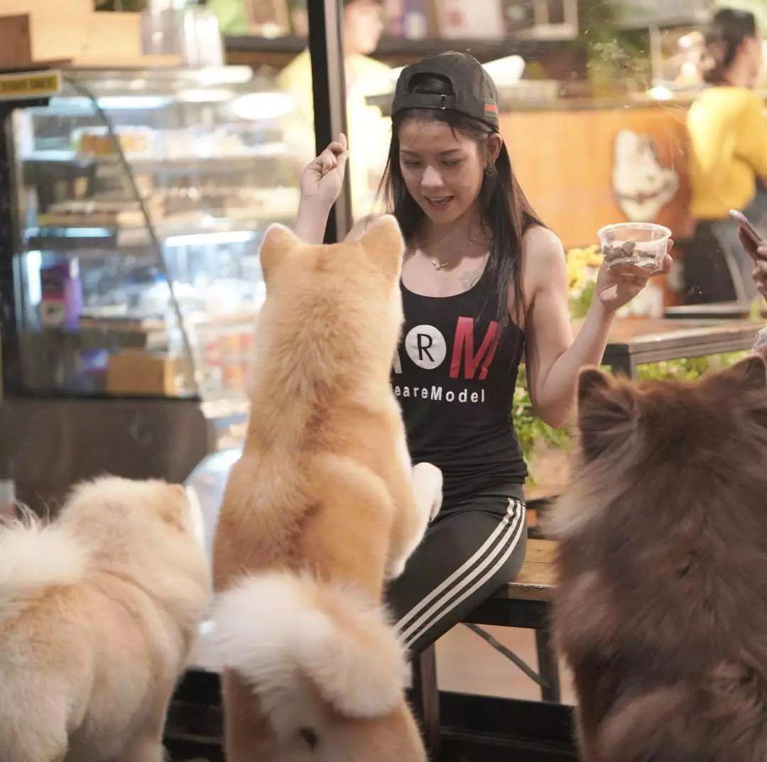 泰国一家以大狗为主题的咖啡厅:Big Dog Cafe
