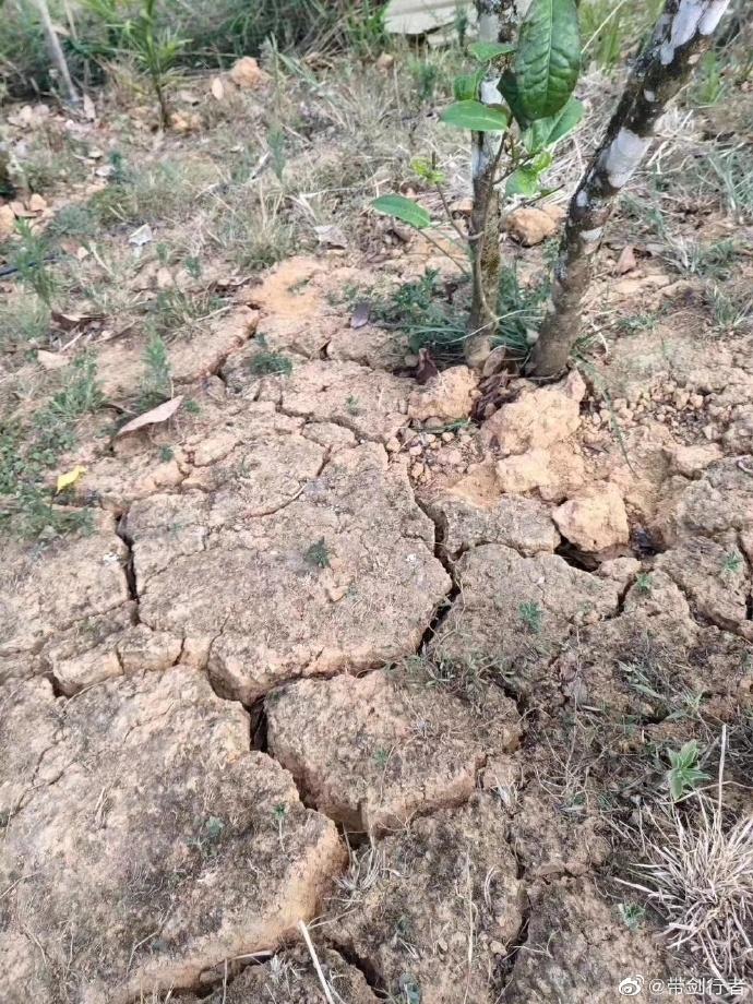 关于2019年干旱下普洱茶,产量、品质、价格及其它