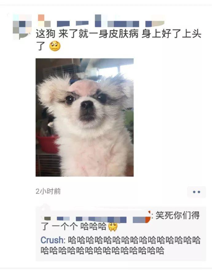 这只狗得了皮肤病后,笑疯了全国网友