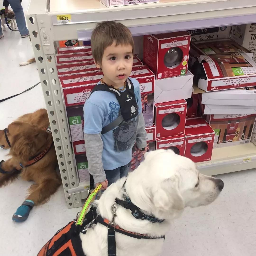 一只名叫乐高的拉布拉多,一个被确诊有自闭症的男孩,很暖心!
