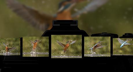 """惊!奥林巴斯这两款相机成""""好摄之徒""""出片利器"""