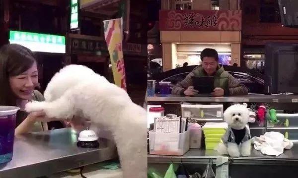 狗砸当店长,看见小姐姐就狂献殷勤,看到大叔就不搭理