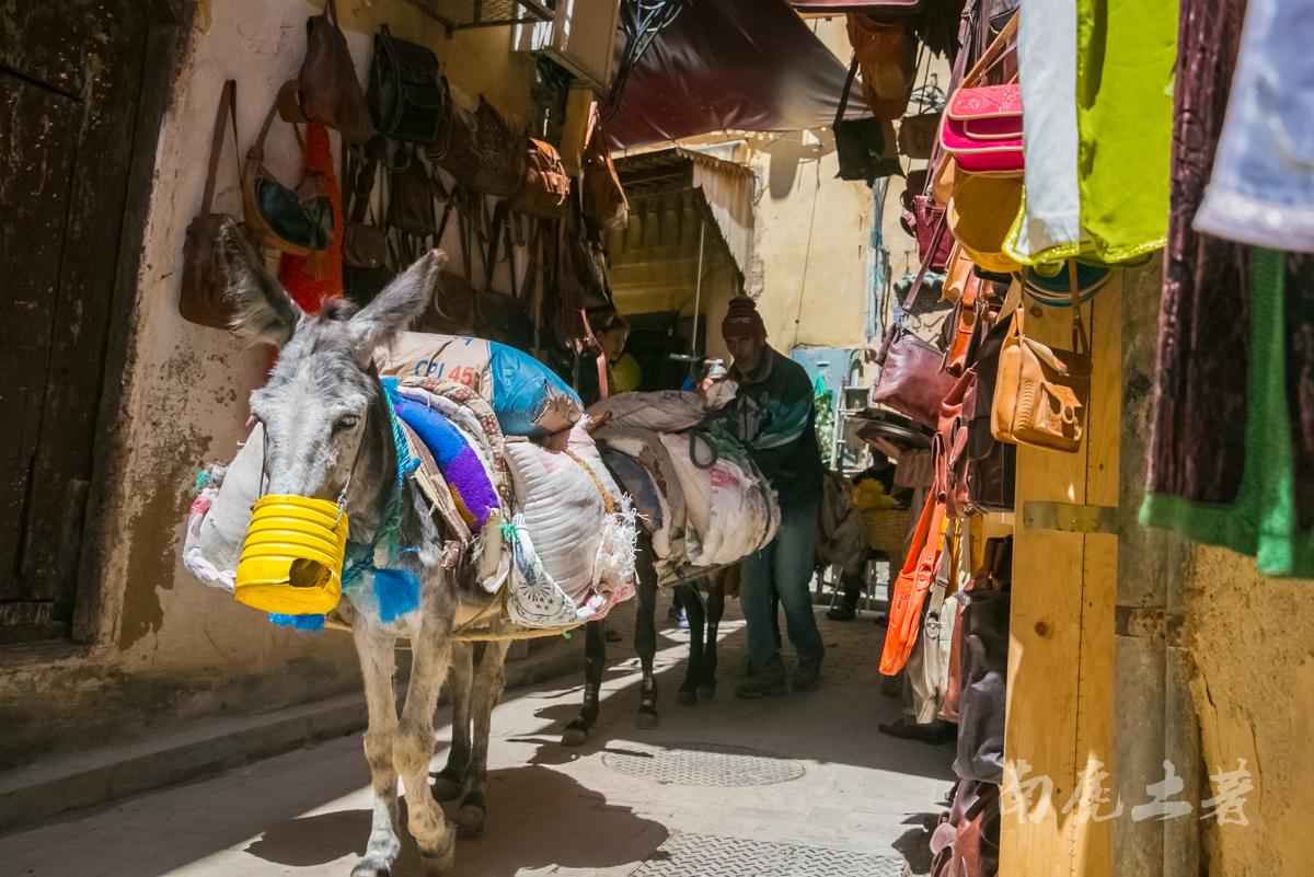 非洲这个城市这么臭,游人却每天排队参观