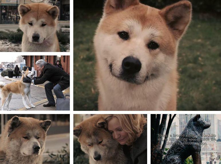 流浪狗被空巢老爷爷收养,原主人1年后却找上门来