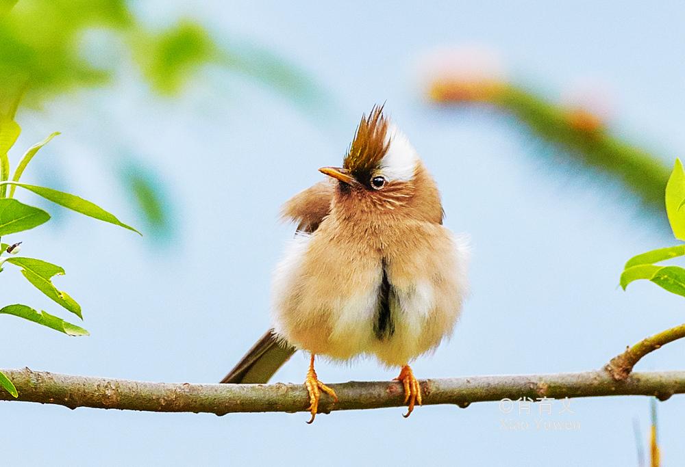 已到山花烂漫时,到云南观鸟,无疑是度过完美夏天的最佳方式