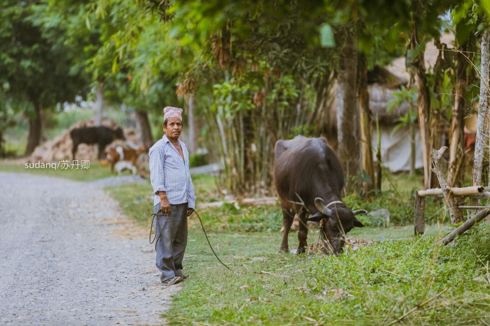 尼泊尔最冒险的世界遗产:奇特旺国家公园,村民与猛兽相伴
