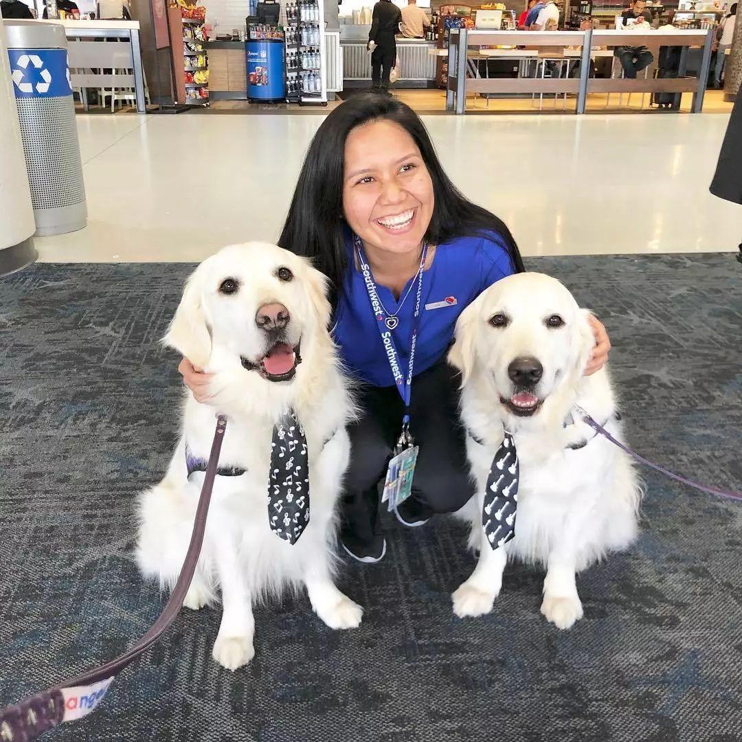 美国机场聘请两位大金毛来工作,这里的旅客也太幸福了吧?