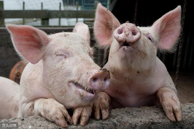 中国有意加大德国猪肉进口量_德国新闻_德国中文网