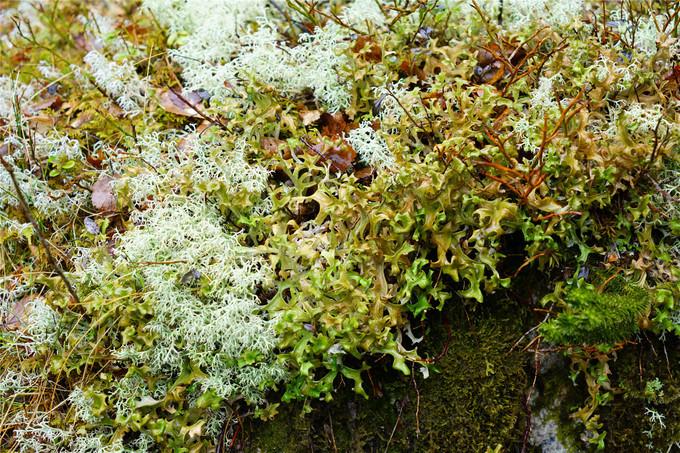布道石上的植物