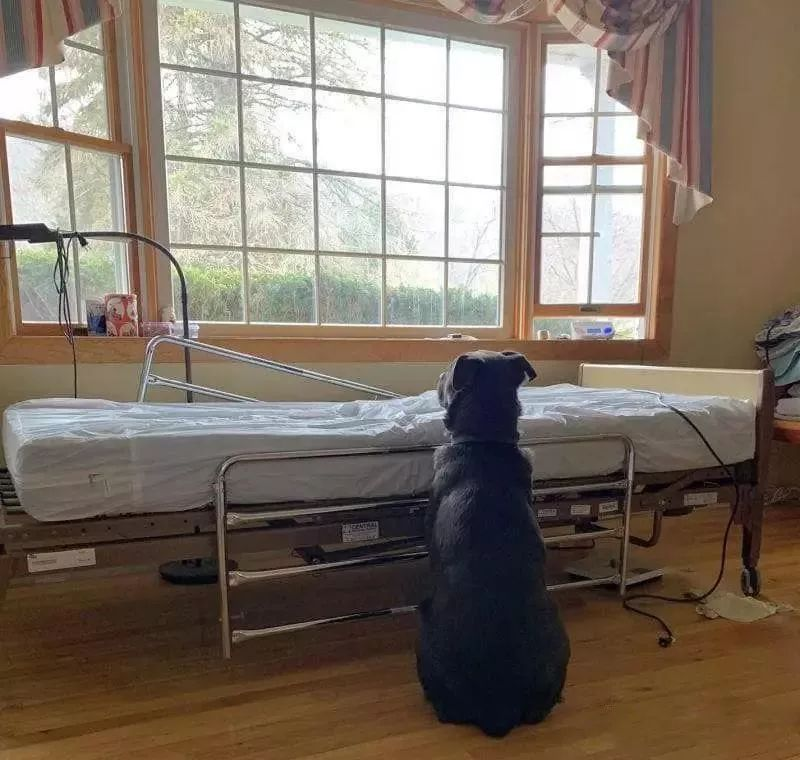 病人已去世,狗狗却固执守在空病床前不肯离去