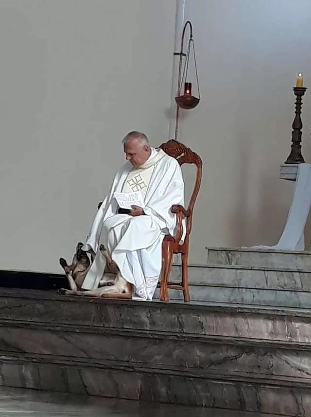 神父庄严唱圣歌的时候,一只狗砸闯入了教堂,疯狂求摸摸!