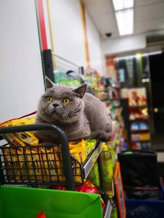 香港这家便利店的店长,靠着腮帮子走红了!