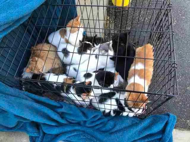 铲屎官遗弃了20只猫猫,背后的原因却令人心碎