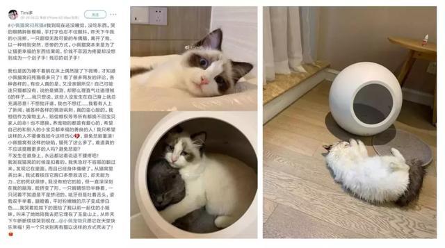 """智能冷暖猫窝""""闷死猫""""事件引发热议,小佩宣布召回智能冷暖猫窝产品"""
