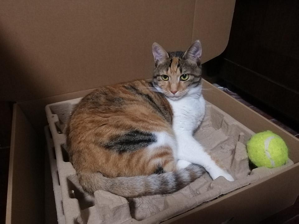 专家称撸猫有助于缓解老年痴呆 朋友,你有猫了吗?