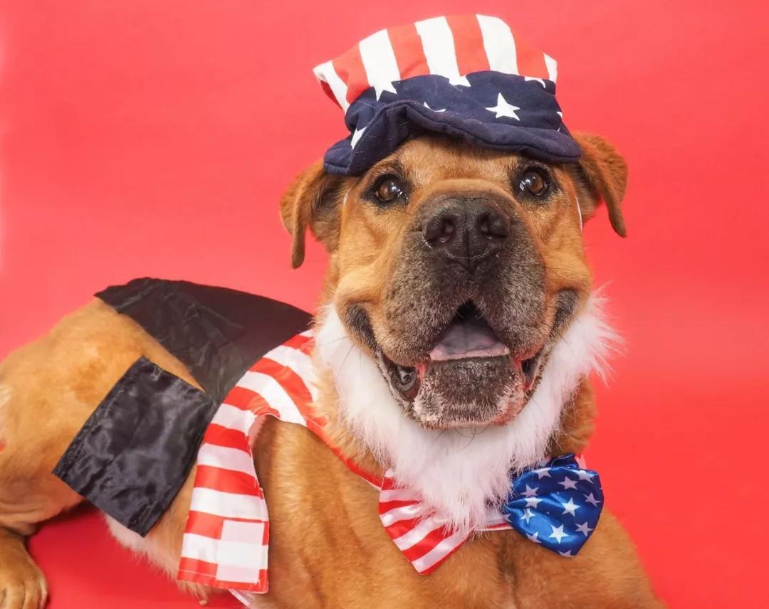 美国的国庆日,总有一帮人偷偷摸摸的来到了收容所