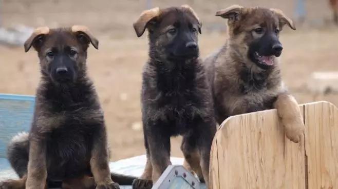 """警局淘汰了""""不合格""""的小警犬,结果被市民抢着领养"""