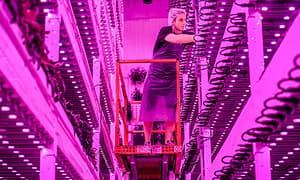 多家美国LED垂直农场拼产量,可供应数百家商店