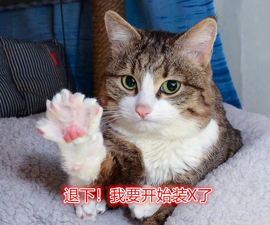 折翼的天使也是天使,网红猫乐观面对残疾,感动猫奴网友