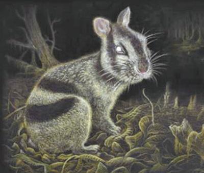 云南昭通发现条纹兔化石:年龄600万年