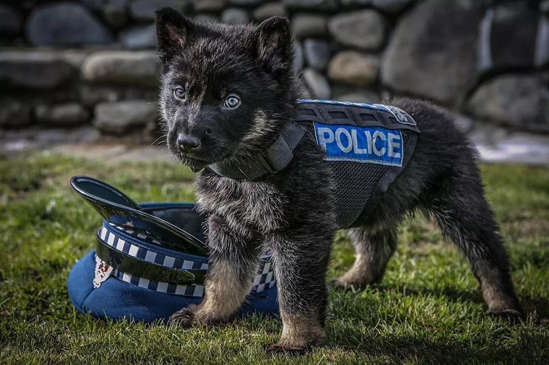 """新西兰警方被上级领导""""通报""""了,原因竟然是:  账号上太多狗了!"""