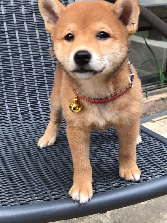 """小狗很有礼貌,第一次见网友就主动""""握手"""",奖励你吃黄瓜"""
