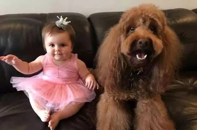 """""""因为怀孕没扔狗,现在娃哭了有狗哄,我终于可以睡个好觉啦!"""""""