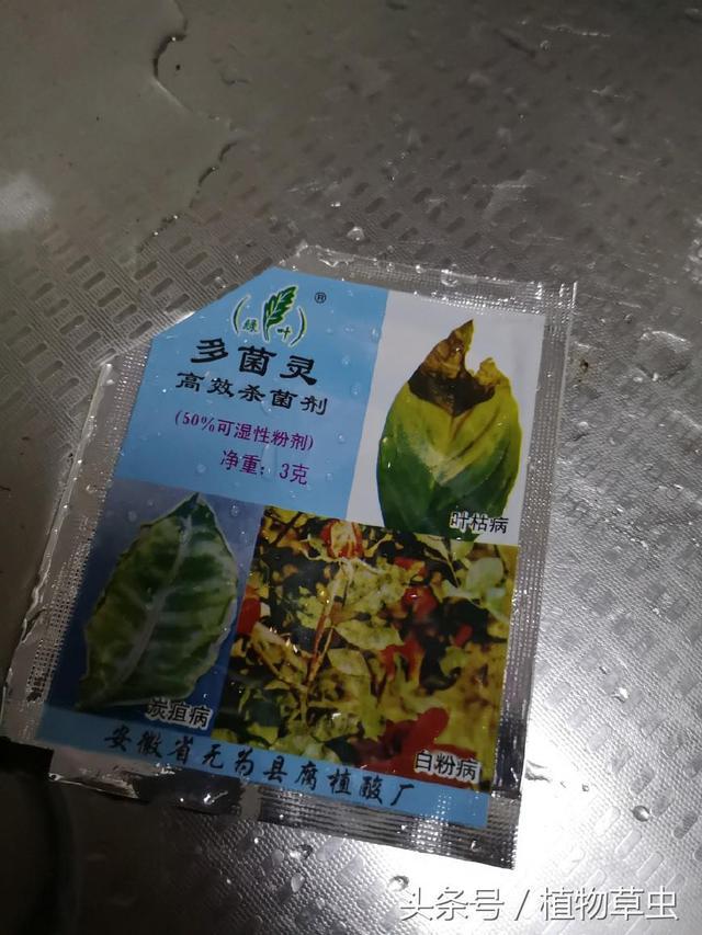 小桃红兰花怎么养(秋季换盆教程)