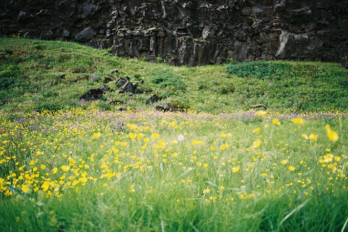 灿烂开放的黄花地