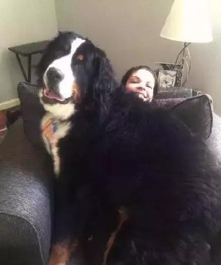 如果你养了一只大型犬,记得千万别眨眼!