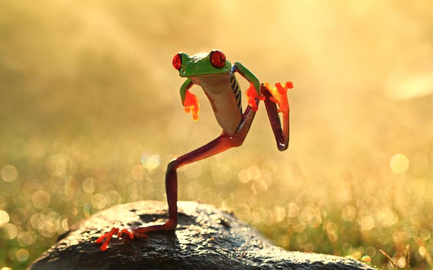 微软发布免费Win10主题包:《动物王国》的照片 - 1