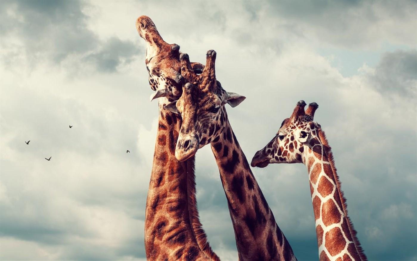 微软发布免费Win10主题包:《动物王国》的照片 - 4