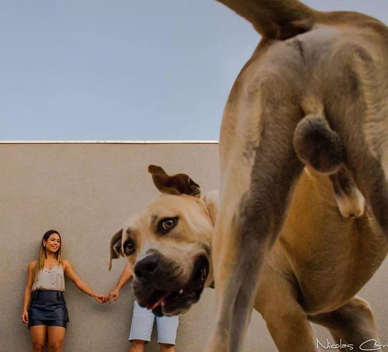 情侣带着家里的狗拍婚纱照