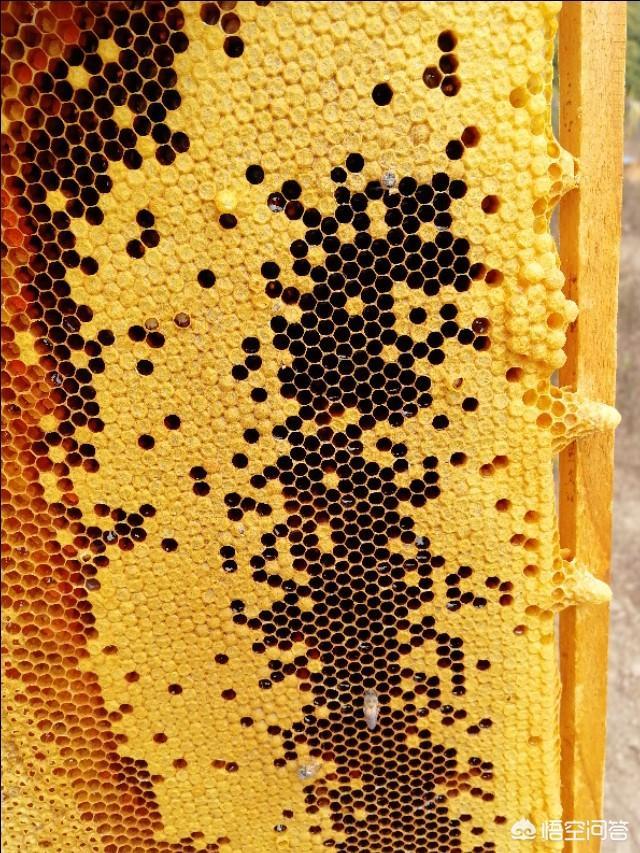 农村养殖蜜蜂利润有多大?蜜蜂养殖一年能赚多少钱?