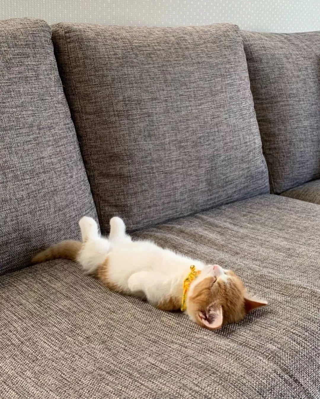 一只睡姿萌化网友的小猫咪