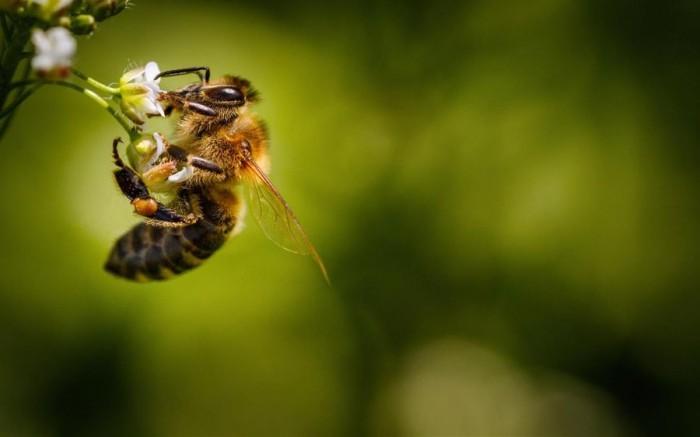 微软放出蜜蜂主题的免费Win10壁纸主题包的照片 - 3