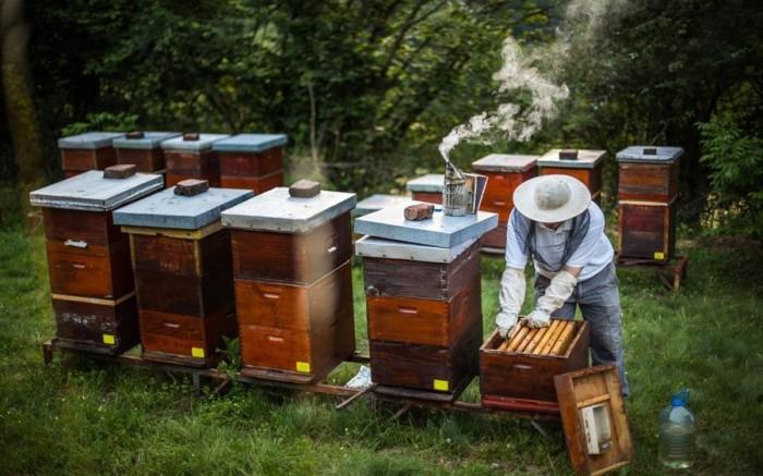 微软放出蜜蜂主题的免费Win10壁纸主题包的照片 - 1