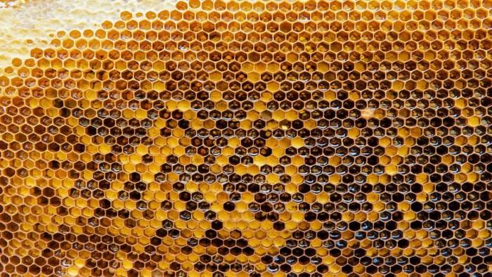 微软放出蜜蜂主题的免费Win10壁纸主题包的照片 - 5