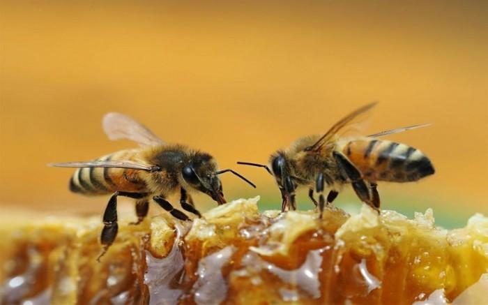 微软放出蜜蜂主题的免费Win10壁纸主题包的照片 - 4