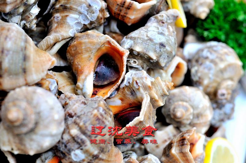 海螺 不能吃_海螺身体构造图文详解,海螺有三个部位不能吃,容易引起中毒 ...