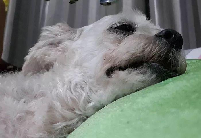 泰国一个老奶奶火了,而带火她的,是她的歌声和狗狗