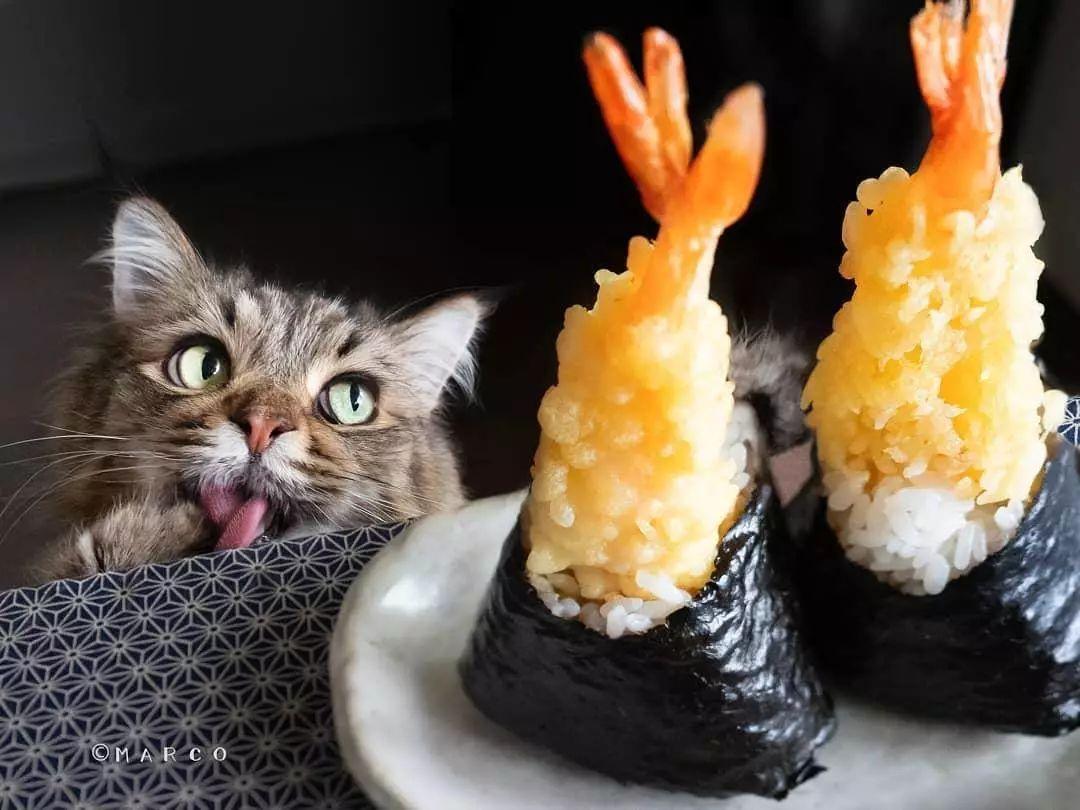 被一只猫撩到是一种怎样的体验?日本网红喵星人,在线撩人