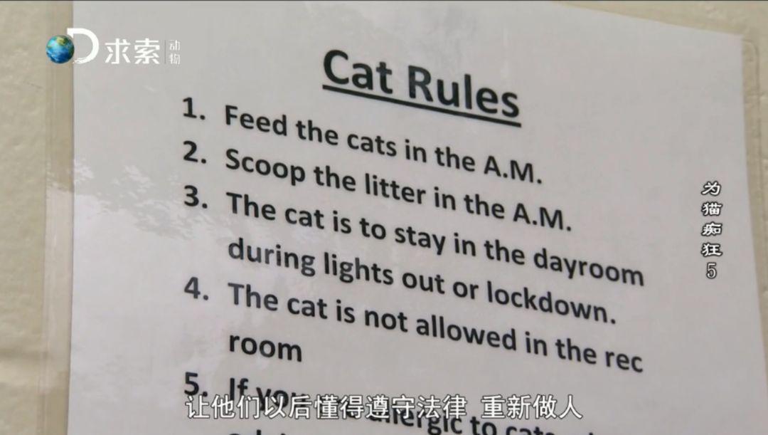把濒死的流浪猫送进监狱让囚犯照顾,后果会怎样?
