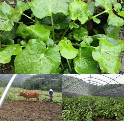 隆发商贸将安康燚甸园植物硒引进春城-中国传真