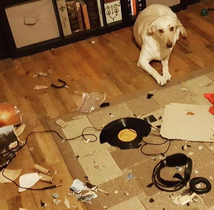 到底什么家庭条件,才可以让狗子实现拆家自由?
