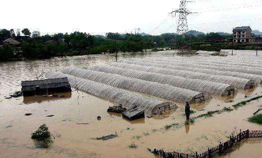 蔬菜大棚被淹后,如何降低土地危害