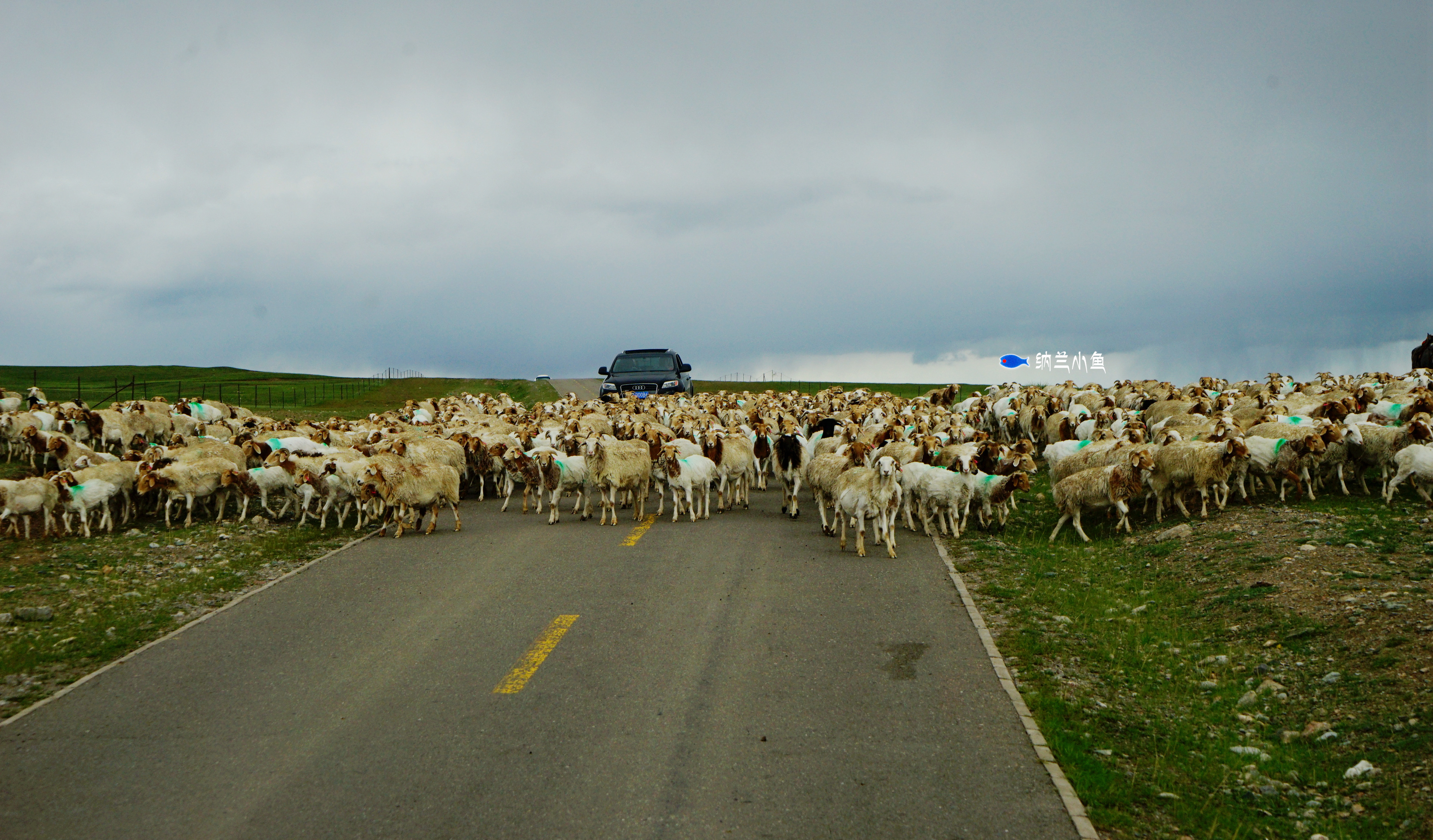一天有四季,十里不同天!揭开新疆秘境巴音布鲁克草原的神秘面纱!