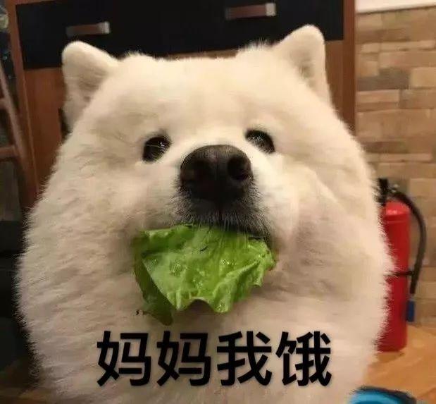素食主义者把狗狗改造的只吃素,没想到……