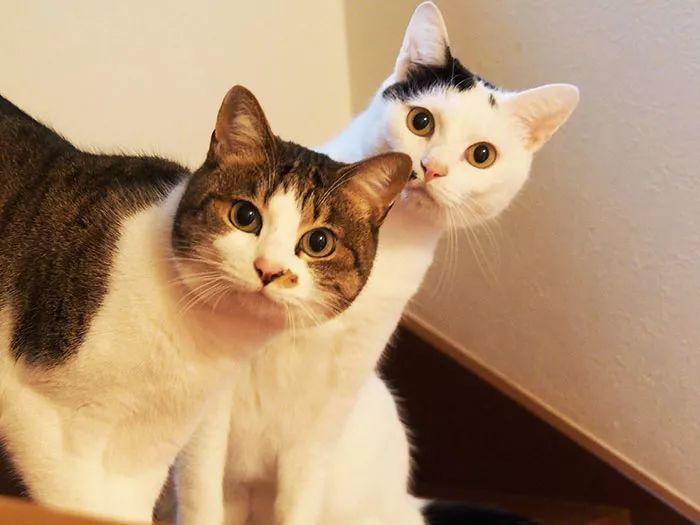 这才是真猫奴:这只柴柴吸猫上瘾,五年捡了14只奶猫!